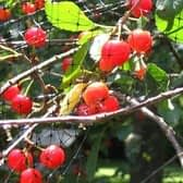 Tuinnet